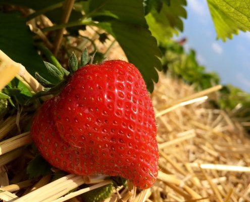 facebook-erdbeere